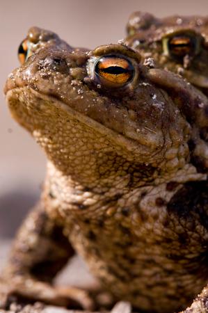Amphibian Amp Reptile Fencing Uk Wildlife Fences Pond