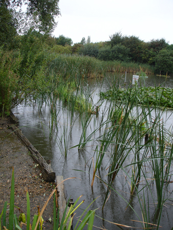 Bio Stabilisation Biostabilisation Pond Weed And Lake