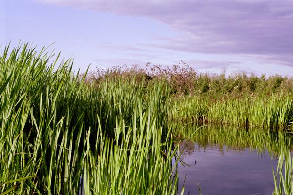 Bio Stabilisation Biostabilisation Pond Weed And Lake